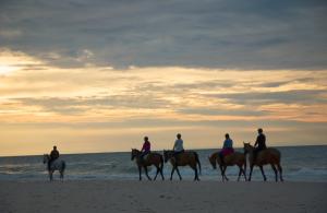 horse-beach-300x195
